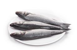 三条新鲜的雪鱼鱼 库存照片