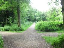 三条路通过自然 免版税库存图片