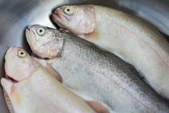 三条鳟鱼 库存照片