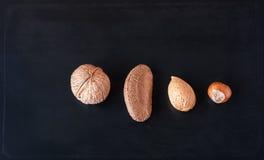 三枚坚果和种子 免版税库存照片