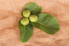 三枚绿色坚果 免版税库存照片
