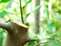 三树干在森林里 免版税库存图片