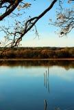 三根木棍子在秋天池塘 库存照片