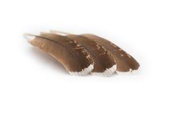 三根棕色羽毛 免版税库存图片
