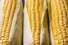三根玉米棒子宏观看法  健康食物好的宏观背景  图库摄影