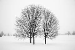 三棵光秃的树在冬天 免版税库存照片