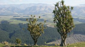 三棵圆白菜树 免版税库存图片