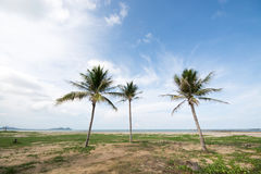 三棵好的棕榈树的图象在蓝天的与某一clou 图库摄影