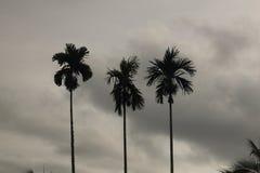 三棵树剪影与二重奏黑白口气的 库存照片