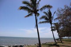 三棵棕榈 库存照片