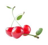 三棵猩红色樱桃 图库摄影