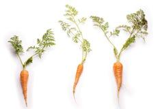 三棵稀薄的红萝卜 库存图片