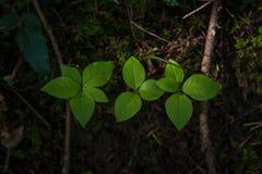 三棵绿色有叶的植物连续青苔和土的与下落的分支 免版税图库摄影