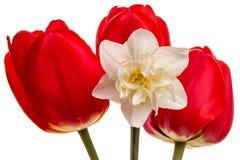 三棵郁金香和水仙 免版税库存图片