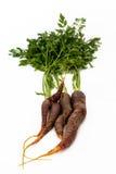三棵黑红萝卜 免版税库存图片