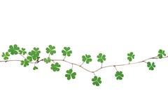 三片叶的绿色离开与三份心形的传单resembl 免版税库存图片