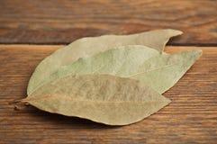 三片月桂树叶子 免版税库存照片