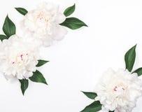 三片白色牡丹花和叶子框架在白色背景 顶视图 平的位置 库存图片