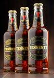 三瓶ofTennents威士忌酒橡木啤酒 库存照片