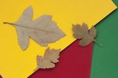 三秋天烘干了在五颜六色的明亮的纸,与拷贝空间的背景的叶子特写镜头文本的 在视图之上 秋天 免版税库存图片
