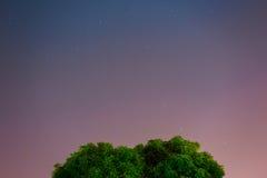 三种颜色与树的夜空 免版税库存照片