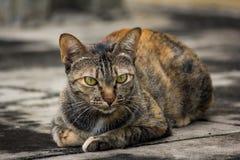 三种颜色猫 库存图片