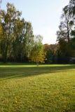 三美丽的年轻秋天桦树在领域和b的中心 免版税库存图片