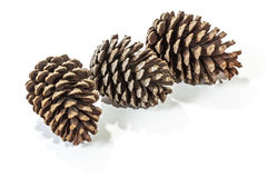 三自然棕色松树锥体样式和纹理 免版税库存照片