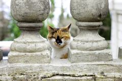三色猫 库存照片
