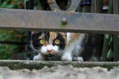 三色的猫 库存照片