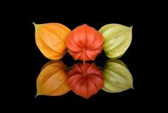 三芽多彩多姿的空泡静物画  库存照片