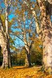 三被隔绝的树在城堡公园 库存照片