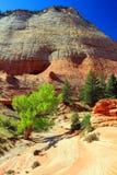 三角叶杨和干河床在棋盘Mesa,锡安国家公园,犹他 库存照片