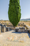 三角叶杨树和详细的马赛克在Volubilis罗马废墟在梅克内斯,摩洛哥,非洲附近 免版税库存图片