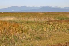 三角洲海涂和沼泽地 免版税库存照片