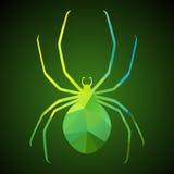 三角蜘蛛  库存照片