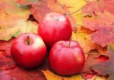 三说谎在一张木桌上的成熟红色苹果计算机围拢由颜色 库存图片