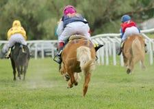 三赛跑的ponys背面图  免版税库存图片