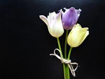 三郁金香花束在黑暗的背景的 库存照片