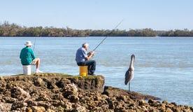三钓鱼,两个人和一伟大蓝色的苍鹭的巢Ardea herodias每 库存图片