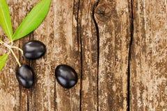 三颗黑橄榄 免版税图库摄影
