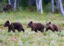 三头小熊走 库存图片