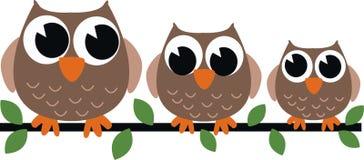 三头棕色猫头鹰 免版税库存图片
