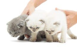 三滑稽的小猫 库存图片