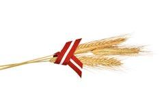 三黑麦耳朵和拉脱维亚的旗子丝带 免版税图库摄影