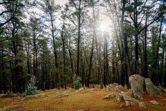 登上克劳福德森林储备,南澳大利亚 库存照片