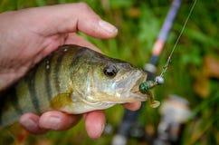 上勾鱼的栖息处 免版税库存图片