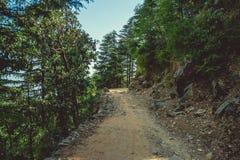 上升一条道路穿过杉木森林 库存图片