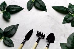 上升了叶子和园艺工具框架,春天从事园艺的概念 免版税库存图片