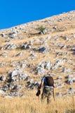 上升在一座山的老远足者在阿布鲁佐 迁徙在夏天期间在自然公园在意大利的中心 老牛佩带camo 免版税库存照片